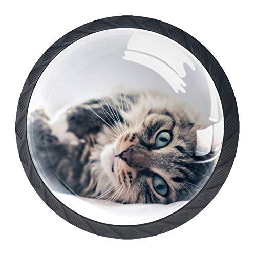 4 piezas de cristal colorido armario armario armario cajón perilla puerta tirón manija, gato gris