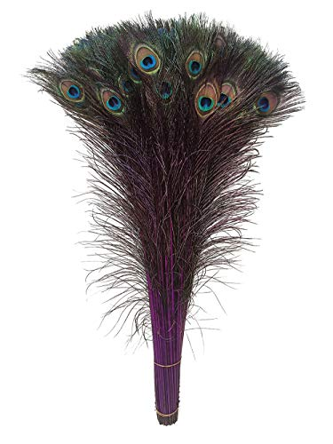 Peacock Feathers, Lampu 25 Pcs Dyeing Feather Long Pole 28-30 inches(Purple)
