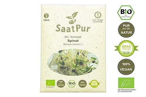 SaatPur Bio Keimsprossen - Spinat - Keimsaat für die Sprossenzucht zuhause - 20g Baby Salat Spinat