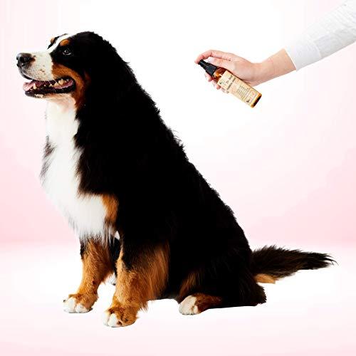natural dog deodorizer homemade
