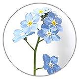 Nontiscordardimé, myosotis sylvatica, 50 semi, per aiuole e gruppi di piante, per recinti, giardini rocciosi, vasi e cesti
