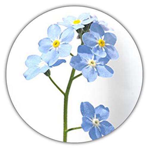Vergißmeinicht/Myosotis sylvatica/ca. 50 Samen/Beliebte Beet- und Gruppenpflanze für Einfassungen, Steingärten, Kübel und Schalen