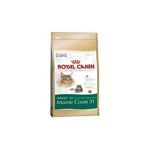 Royal Canin - Comida completa para gato para gato para maine coon 31 (4 kg)