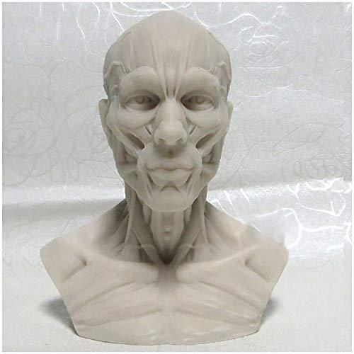Mensch-Modell-Fertigkeit - Anatomisches menschlicher Kopf-Schädel-Muskel-Modell - 1: 3 Größe Menschlicher Schädel Skulptur Kunst Modell - Resin Crafts Modell Malerei - für Künstler Gemälde Lehrmittel