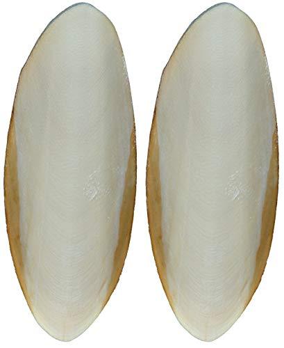 Trixie 76385 Sepia-Schalen für Reptilien, natur, klein, 2 St.