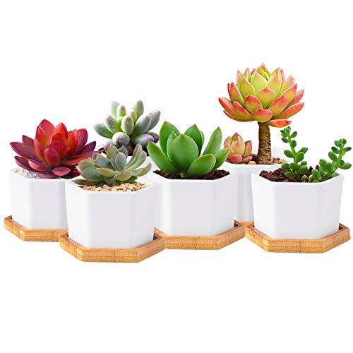 Hamiledyi Ceramic Succulent Planter Simple Style Hexagon Plant Pot White Mini 2.75 Inch Pots Planting Flower Cactu Bonsai with Bamboo Tray, Set of 6 (Plants Not Included)