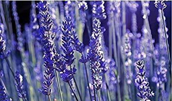 Vistaric 20 graines/paquet de haute qualité graines de fleur de lavande pour désodoriser la lavande parfumée bain décoration maison livraison gratuite