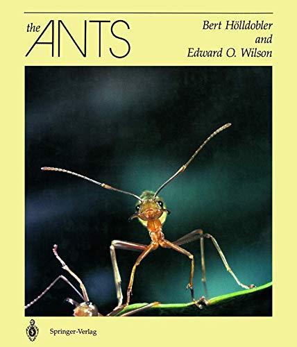 The Ants