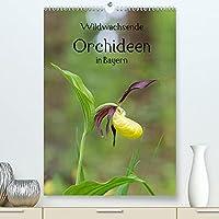 Wildwachsende Orchideen in Bayern (Premium, hochwertiger DIN A2 Wandkalender 2022, Kunstdruck in Hochglanz): Eine Sammlung der schoensten Fotos unserer einheimischen Orchideen (Geburtstagskalender, 14 Seiten )