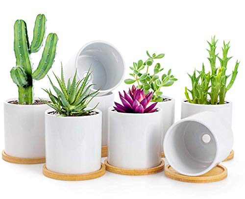 BUYMAX Succulent Plant Pots – 3.2 inch White Ceramic Flower Pot with Drainage Holes and Bamboo Tray - Small Cactus Planter Pots for Home Office Decor and Gift, 8 Pack