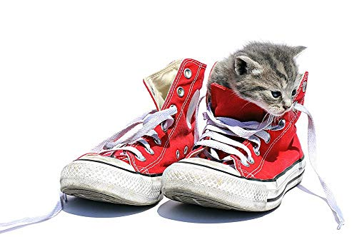 Lsping puezle 500 pieces Chats-Plimsoll-Chaussure-Chatons-Lacets-Blanc 52x38cm