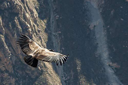 Pintura de diamante 5D Gyps Birds Peru Condor, Raptor, vuelo de la montaña de los Andes Cuadros de bordado de diamantes de imitación de cristal DIY para decoración Pegatinas de pared 40x50Cm