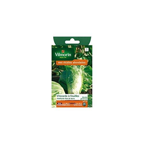 Vilmorin - Sachet graines Chicorée à feuilles Améliorée pain de sucre