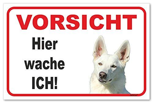 AdriLeo Schild - Vorsicht Weißer Schäferhund - Hier wache ich - (20x30cm) / Achtung Hund Wachhund