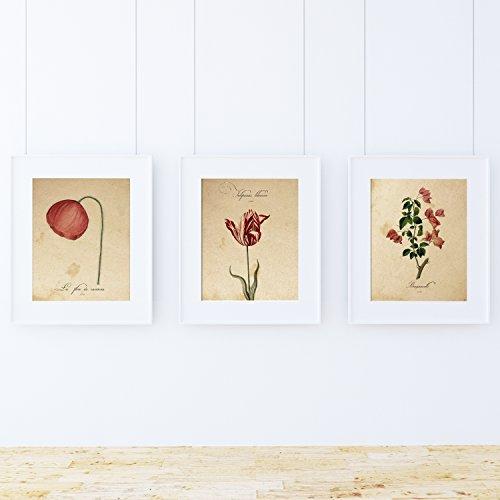 Nacnic Set di Tre Stampe in Stile botanico con Immagini di Fiori e Piante inspirate alla Natura. Set Red One Creato su Carta da 250 Grammi di Alta qualita´
