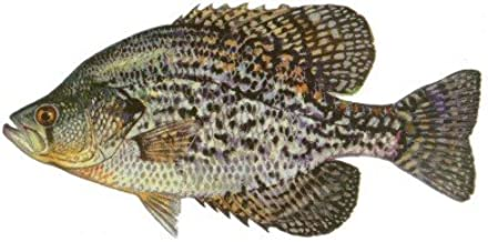 Fish Stix Crappie Decal