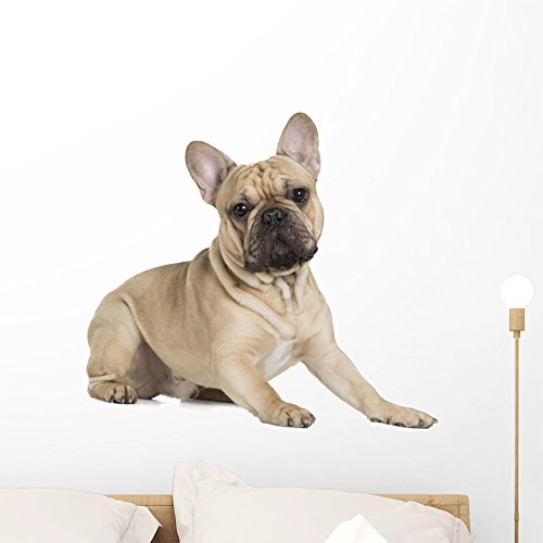 Wallmonkeys French Bulldog Fawn Color Wall Decal Peel and Stick Graphic (24 in W x 22 in H) WM359461