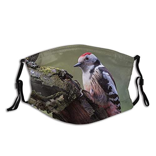 Máscara facial de moda cómoda naturaleza árbol carpintero pájaro a prueba de sol moda Bandana Headwear para la pesca