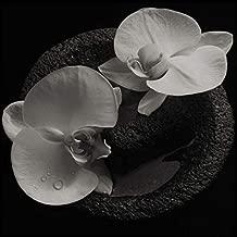 Corpse Flower (Ltd.ed.) Coloured)