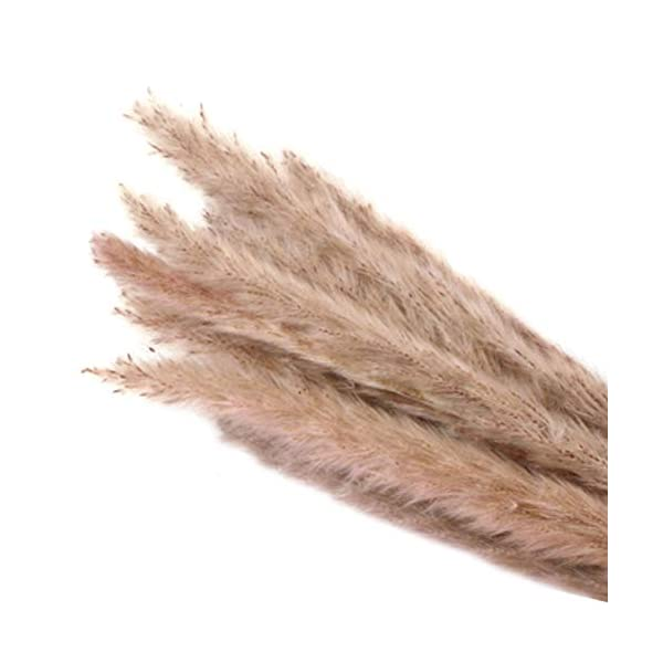 lzndeal Decorative Artificial Flowers,Arts Crafts,15 Pcs Dried Small Pampas Grass Phragmites Communis Decoration for Home Hotel Wedding