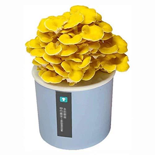 DRSM Kit orgánico de Cultivo de Hongos Shiitake, bonsái de Micro Semillas de Hongos para Plantar Verduras, Bolsa de esporas Lista para Crec