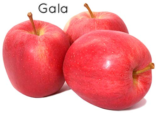 ' GALA ' - Bodensee-Apfel vom Rosenhäusle