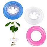 2-Pack Avocado Tree Growing Kit, Avocado Seed Planting Bowl with Swim Rings, Indoor Avocado Grower/Planter for Avocado Lover, Garden Kitchen Gift for Friends & Family