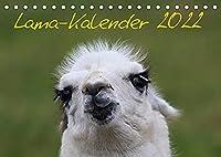 Lama-Kalender 2022 (Tischkalender 2022 DIN A5 quer): Ein Kalender ueber eine in unseren Breiten eher seltenen Spezies (Monatskalender, 14 Seiten )