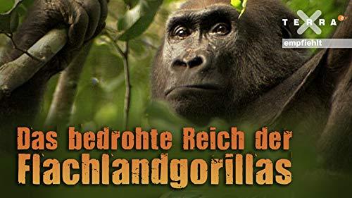 Das bedrohte Reich der Flachlandgorillas