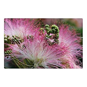 LESGAULEST Doormat Floor Rug/Mat (23.6 x 15.7 inch) – Flower Pink Blossom Mimosa Silk Summer Nature