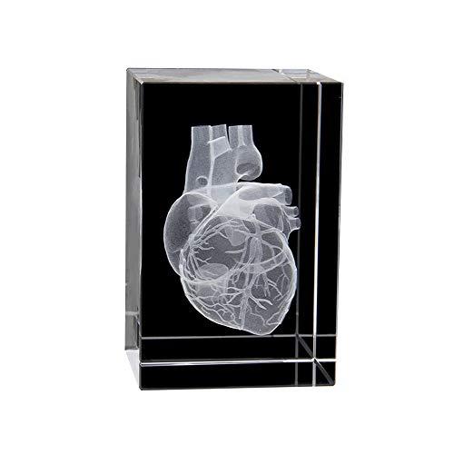JJIIEE Briefbeschwerer des anatomischen 3D-Modells für das menschliche Herz (lasergeätzt) in Crystal Glass Cube Science-Geschenk (ohne LED-Basis) (3,1 x 2 x 2 Zoll)