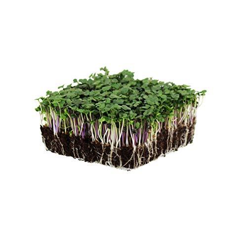 Organic Spicy Salad Mix Microgreens Seeds: 8.5 Gram Packet - Non-GMO Micro Greens Seed Blend: Broccoli, Kale, Mustard, Cabbage, Arugula, Mustard, More