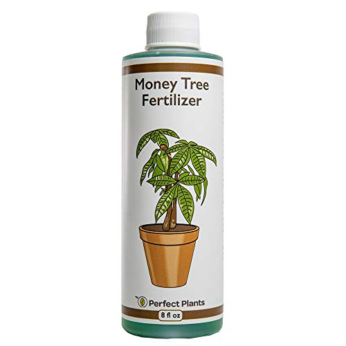 Perfect Plants Liquid Money Tree Fertilizer | 8oz. of Premium Concentrated Indoor and Outdoor Pachira Aquatica Fertilizer | Use with Containerized Houseplant Money Trees