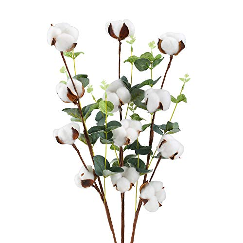 HUAESIN 3Pcs Flores Artificiales Algodon Seco Rama Algodon Natural Blanco con Hoja Eucalipto Verde Arbusto Flores Secas...
