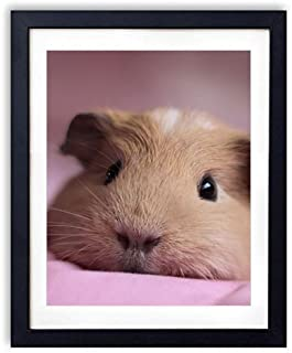 SHADENOV Black Wood Framed Wall Art - Guinea pig Look Nose Lying - Art Print Pictures For Wall Decoration 16x24 Inches