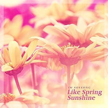 봄 햇살처럼