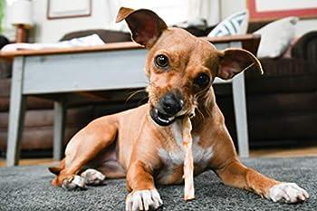 Hughes Design Earth Animal No Hide Lot de 10 friandises de Rechange en Cuir Brut pour Chien – Stix – Poulet 45 g