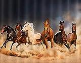 FOURFOOL DIY 5D Diamante Pintura por Número Kit,Los caballos sementales masculinos corren en animales de granja archivados,Rhinestone Bordado Artes Manualidades Lienzo,30x40cm
