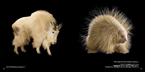 PHOTOARK動物の箱舟絶滅から動物を守る撮影プロジェクト