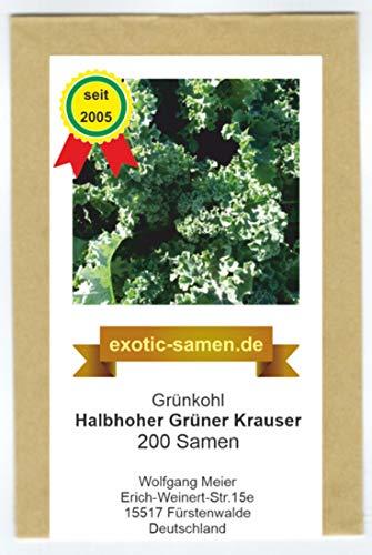Grünkohl - halbhoher grüner Krauser - 200 Samen