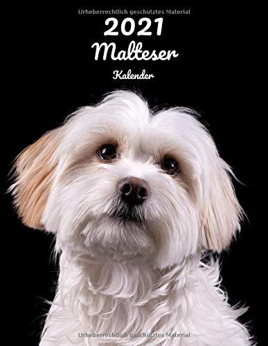 2021 Malteser Kalender: 123 Seiten, DIN A4 | 14 Monate Kalender | Terminplaner | Tagebuch | Terminkalender | Organizer für Hundeliebhaber
