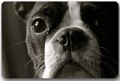 TSlook Fashions Fußmatte/Front-Wasserspeier Cute Boston Terrier Welcome Fußmatte (59,9x 39,9cm L x W)