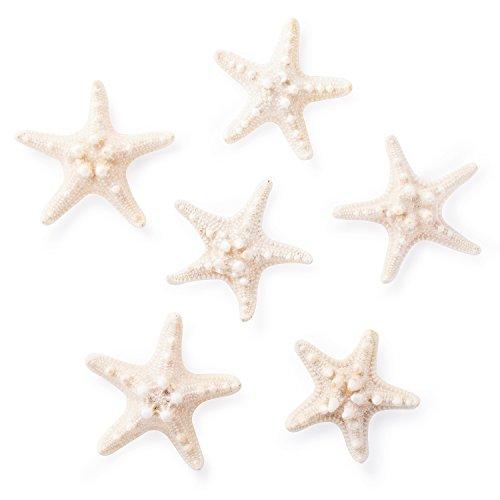 Mini Sea Stars