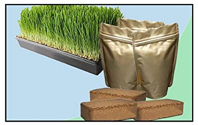 Wheatgrass Growing Kit - Medium from Naturally Green