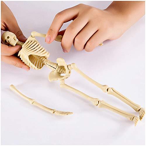 FHUILI Mini-Skelett-Modell - Menschliches Skelett Bausystemsatzes Miniaturmodell - Medizinische anatomisches Skelett Lehre Modell - für das Studium Medizinischer Lehre Modell
