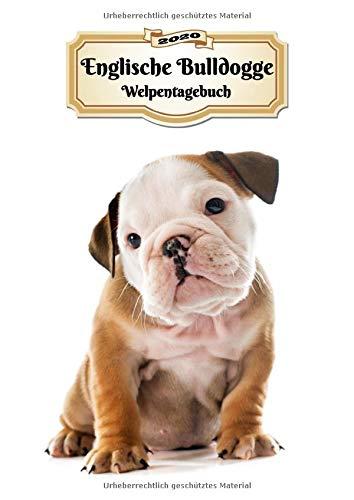 2020 Englische Bulldogge Welpentagebuch: Tagebuch für Welpen und Hunde   139 Seiten   DIN A4   Softcover   Taschenkalender   Terminplaner   Wochenplaner   Terminkalender   Organizer