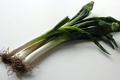Dae-Pa Korean Large Green Onion Seeds - 100 Seeds