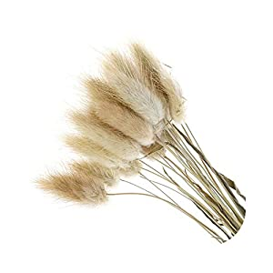 shop 1994 20pcs Natural Dried Flowers Lagurus White Artificial Flowers Colorful Fake Rabbit Tail Grass Ovatus Foxtail Bouquet Long Bunches-2-