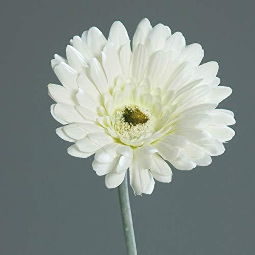 mucplants Künstliche Gerbera 56cm Seidenblumen Kunstblumen künstliche Blumen (Creme)