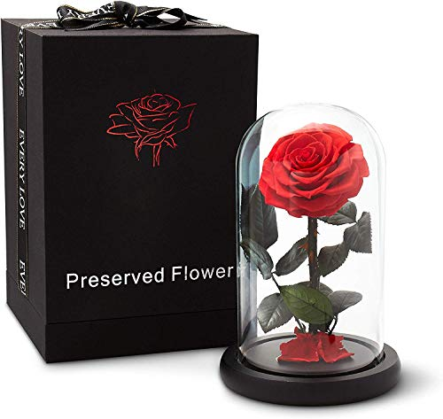 Eternal Rose LED Stand